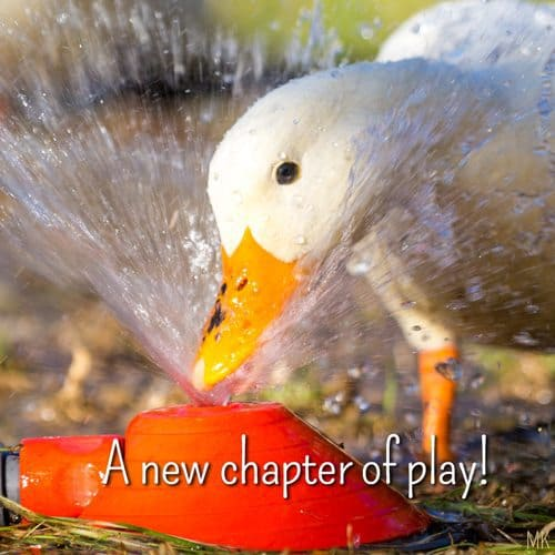A new chapter of play. | A message brought to you with love, light and blessings from Marci Kobayashi at marcikobayashi.com