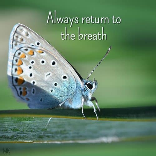 Always return to the breath. | A message brought to you with love, light and blessings from Marci Kobayashi at marcikobayashi.com