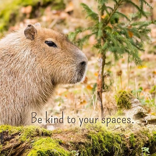 Be kind to your spaces. | A message brought to you with love, light and blessings from Marci Kobayashi at marcikobayashi.com