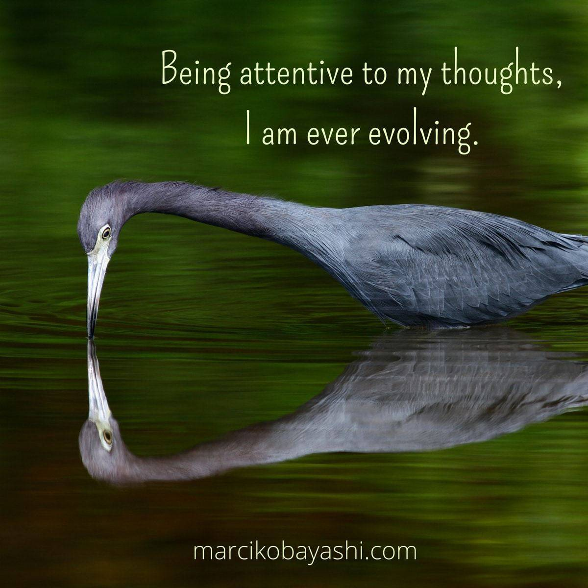 Being attentive to my thoughts, I am ever evolving | Marci's musings at MarciKobayashi.com