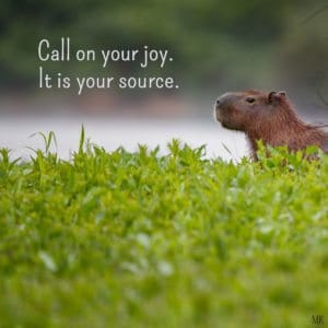 Call on your joy. It is your source. | Intuitive Messages brought to you with love, light and blessings from Marci Kobayashi