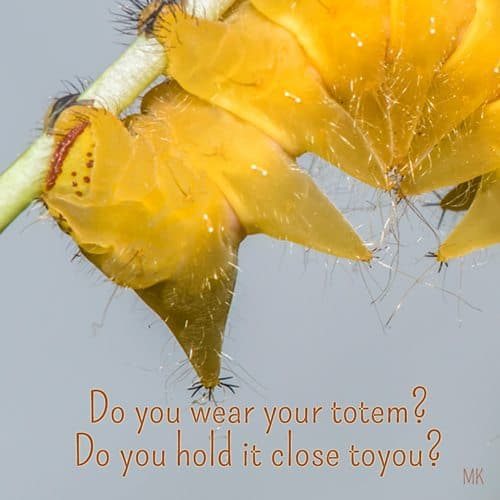 Do you wear your totem? Do you hold it close to you? | A message brought to you with love, light and blessings from Marci Kobayashi at marcikobayashi.com