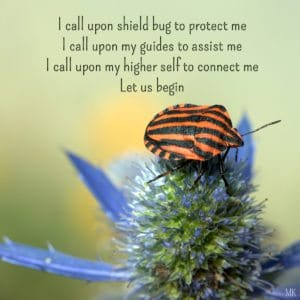Establishing boundaries and protection with the help of Shield Bug