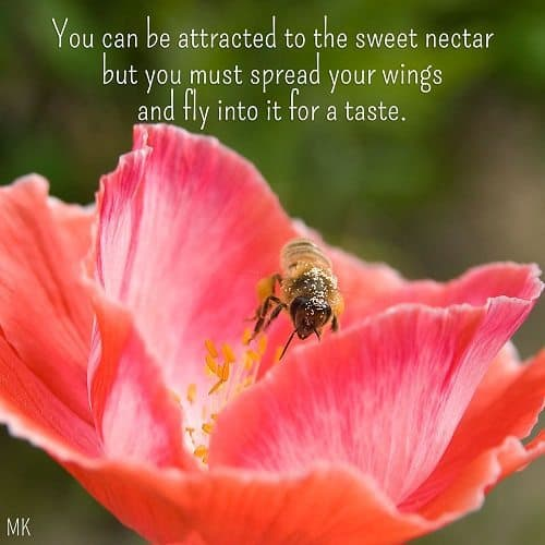 You can be attracted to the sweet nectar but you must spread your wings and fly into it for a taste. | A message brought to you with love, light and blessings from Marci Kobayashi at marcikobayashi.com