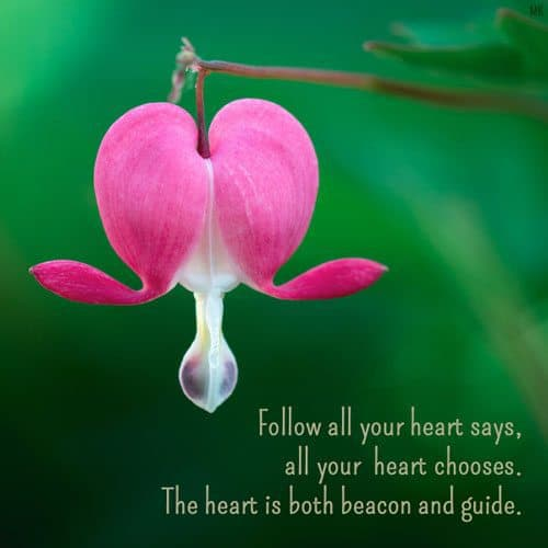 Follow all your heart says, all your heart chooses. The heart is both beacon and guide. | A message brought to you with love, light and blessings from Marci Kobayashi at marcikobayashi.com