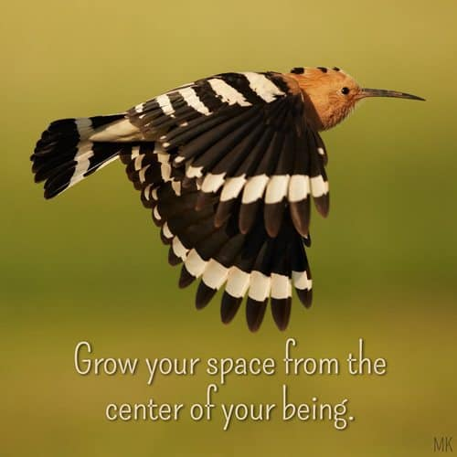 Grow your space from the center of your being. | A message brought to you with love, light and blessings from Marci Kobayashi at marcikobayashi.com
