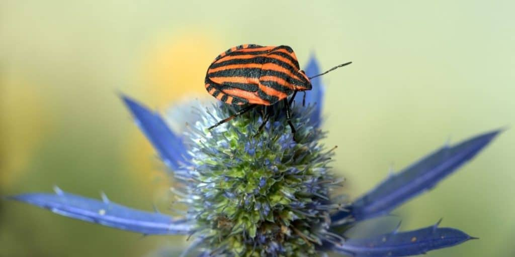 Establishing boundaries and protection around my energy and business with the help of Shield Bug
