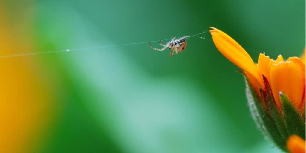 Spend time every day to tending your web