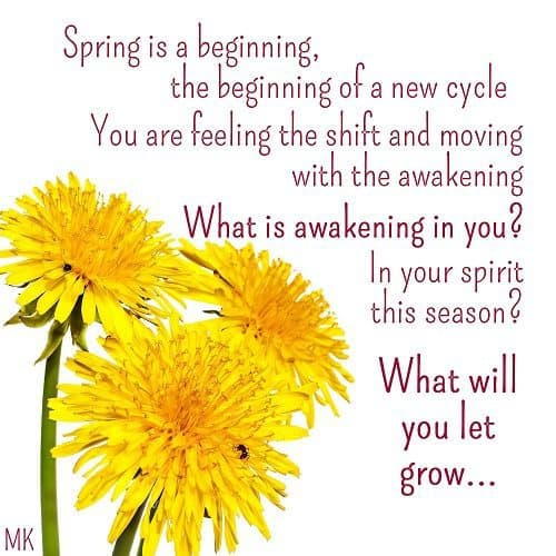 Spring is a beginning, the beginning of a new cycle. You are feeling the shift and moving with the awakening. What is awakening in you? What is awakening in your spirit this season? What will you let grow? A message brought to you with love, light and blessings from Marci Kobayashi at marcikobayashi.com
