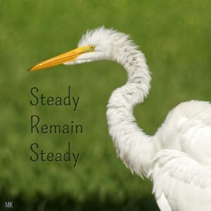 Steady, remain steady. An Intuitive Messages brought to you with love, light and blessings from Marci Kobayashi
