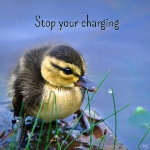 Stop your charging. | A message brought to you with love, light and blessgings from Marci at marcikobayashi.com