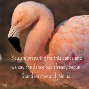 You are preparing for this dance and we say the dance has already begun. Stand up now and join us. | A message brought to you with love, light and blessings from Marci Kobayashi at marcikobayashi.com