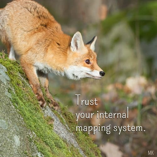 Trust your internal mapping system. | An intuitive message brought to you with love, light and blessings from Marci Kobayashi at marcikobayashi.com