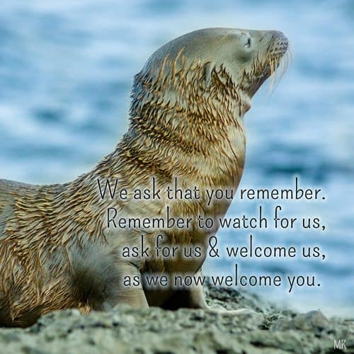 We ask that you remember. Remember to watch for us, ask for us & welcome us, as we now welcome you. | An intuitive message brought to you with love, light and blessings from Marci Kobayashi at marcikobayashi.com
