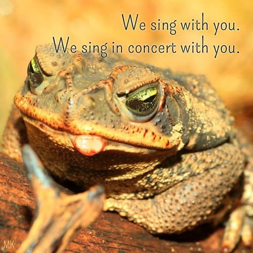 We sing with you. We sing in concert with you. | A message brought to you with love, light and blessings from Marci Kobayashi at marcikobayashi.com