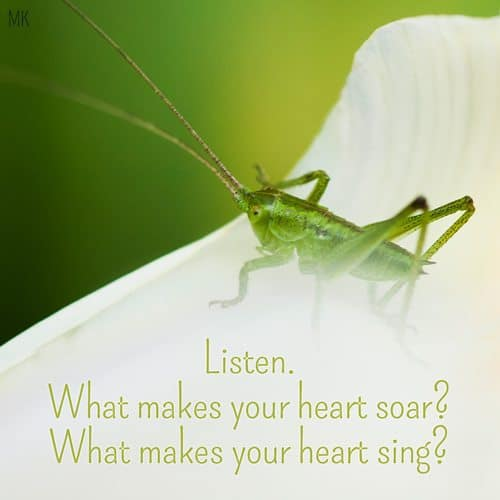 Listen. What makes your heart soar? What makes your heart sing? | A message brought to you with love, light and blessings from Marci Kobayashi at marcikobayashi.com